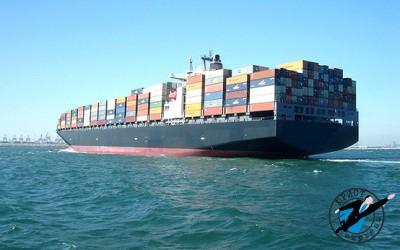 Таможенная декларация оформялется на определенный вид товаров